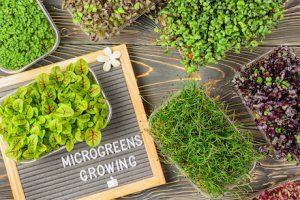 Microgreens Growing Selection